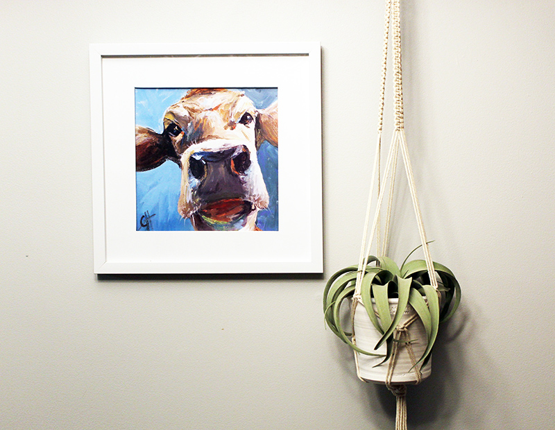 macrame plant hanger with plant hanging on wall next to cow picture