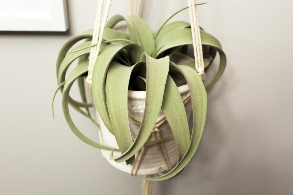 White pot with plant hanging in macrame